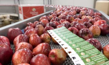 labels - apples